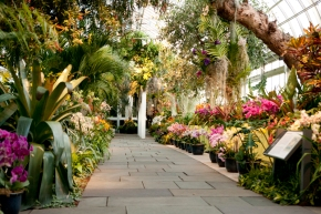 The Orchid Show –  New York Botanical Garden -Feb 18 – April 19