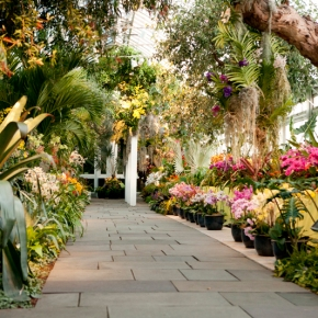 The Orchid Show –  New York Botanical Garden -Feb 18 – April19